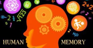 Short Term vs Long Term Memory