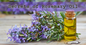 Rosemary For Memory Improvement